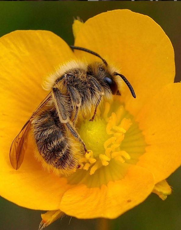 """Tutela api nel programma formazione """"Women for Bees"""""""